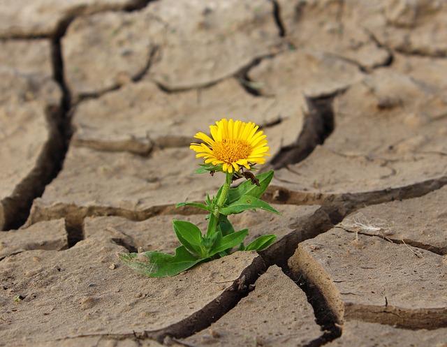 La esperanza se abre paso en medio de las grietas